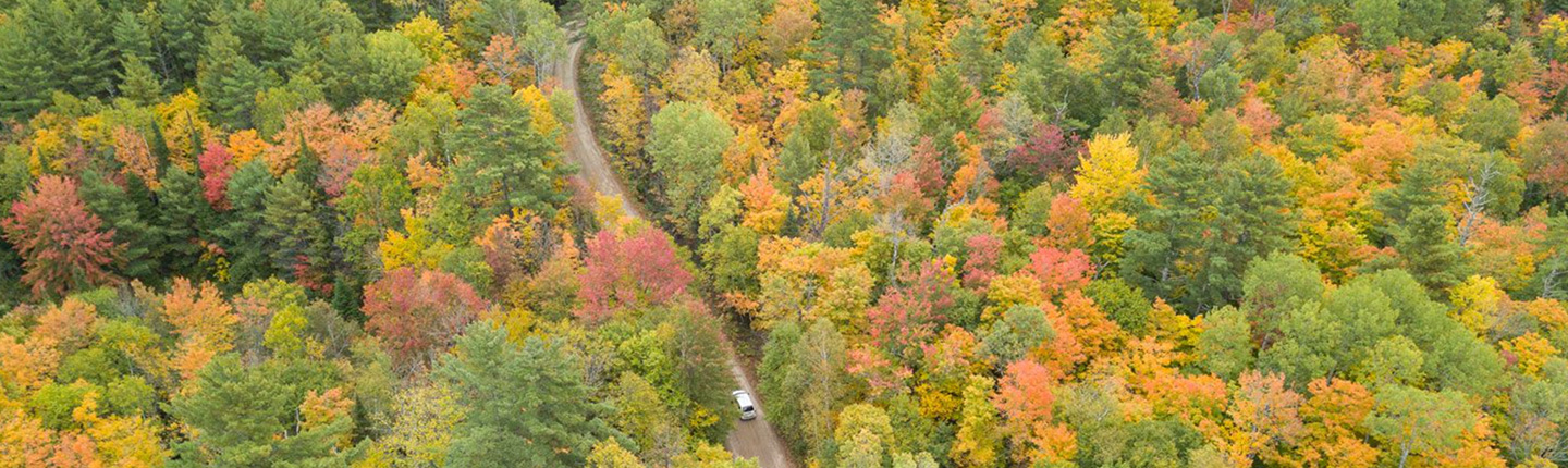 Aerial view of a car on a country road surrounded by trees in full fall colours